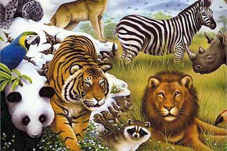 Zoo-Animals-Wallpaper-1